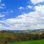 Nature in Chianti